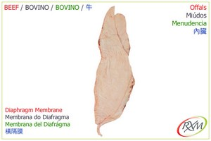 miudos,10,diphragm_membrane